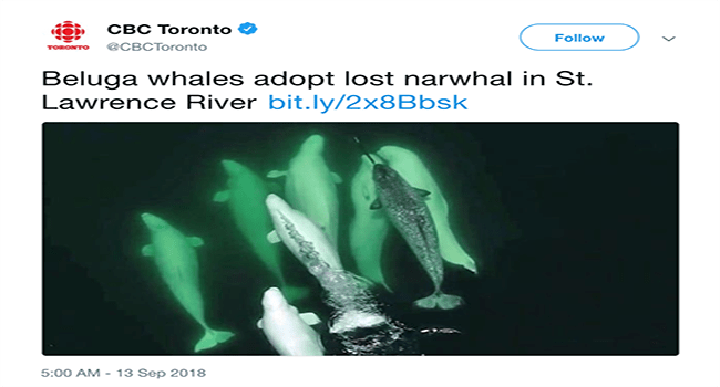 crazy river lolz adoption cute whales cute lol story whales funny weird - 6743557