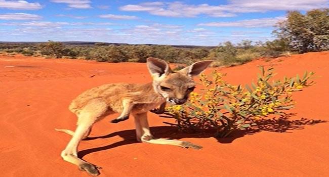 lolz adorable cute kangaroos kangaroo cute help joeys lol Adorable Animal love Sanctuary funny - 6744069