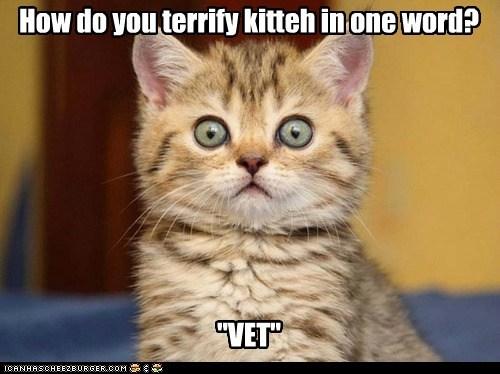 """""""VET"""" How do you terrify kitteh in one word?"""