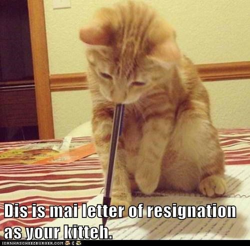 Dis is mai letter of resignation as your kitteh  - Lolcats
