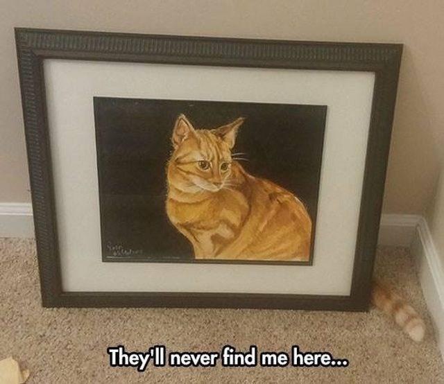 funny memes Memes Cats cat memes - 6744581