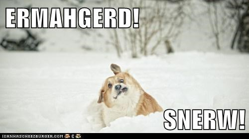 dogs snow Ermahgerd corgi winter derp - 6744731904