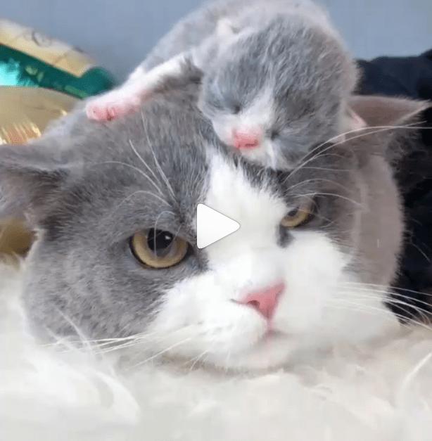 instagram cat videos Cats top 5 - 6744837