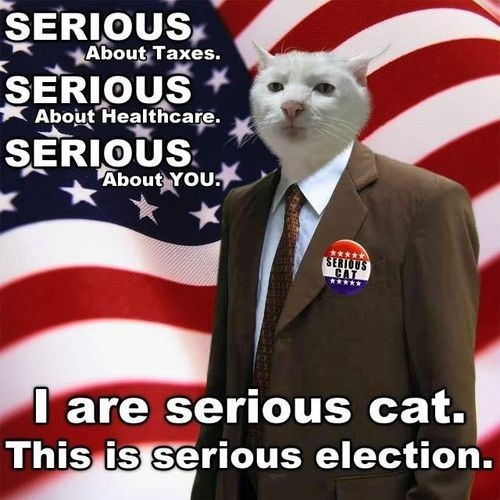 elections captions america serious cat serious Cats politics - 6745272576