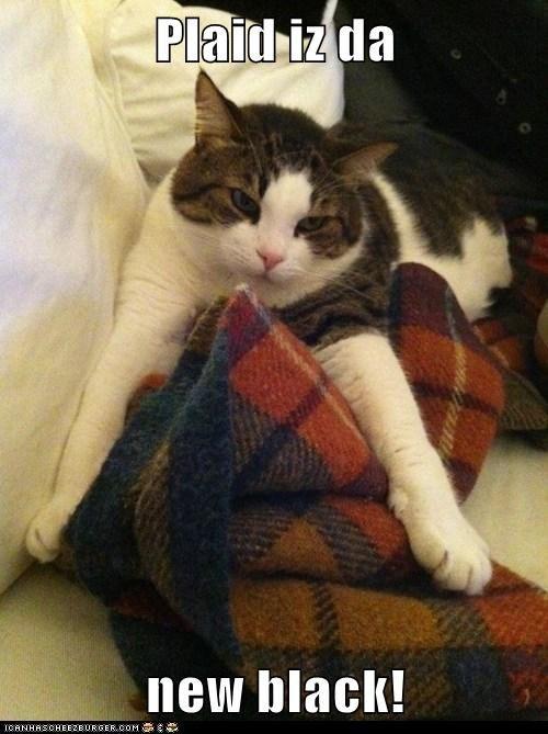 cheezburger captions TV lolwork Cats - 6745340416