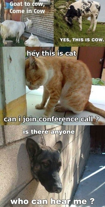 cat dogs this is dog conference call wall animals - 6745402624