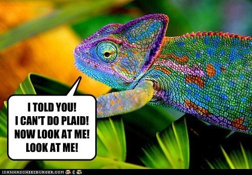 colors plaid chameleon lizard look at me iguana - 6745532160