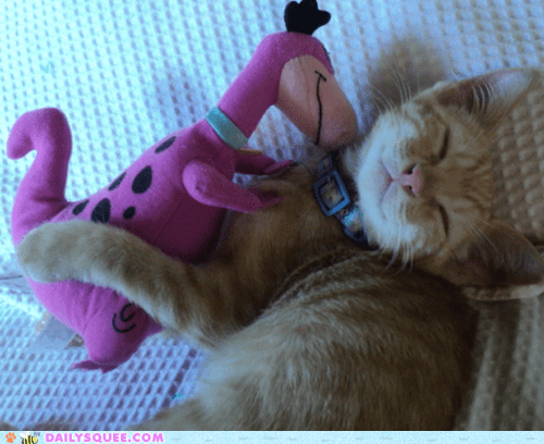kitten,dino,reader squee,pets,stuffed animal,Cats,squee,sleeping