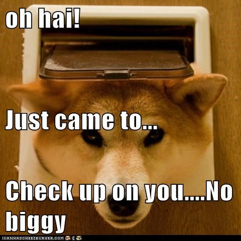 Oh Hai Just Came To Check Up On You No Biggy I Has A Hotdog Dog Pictures Funny Pictures Of Dogs Dog Memes Puppy Pictures Doge