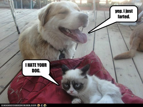 dogs farts Grumpy Cat tard what breed Cats - 6745765632