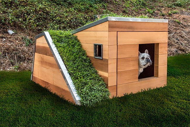 green dogs roof modern home - 6745861