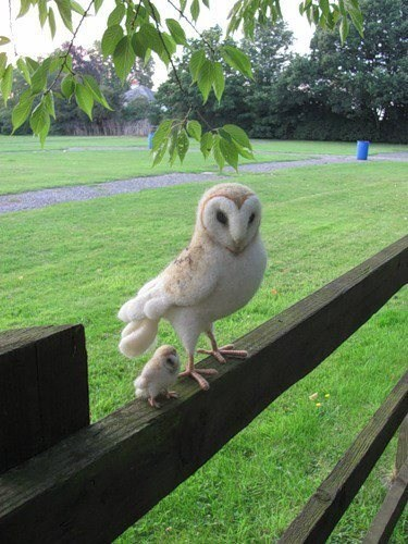 Babies,birds,tiny,owls,squee