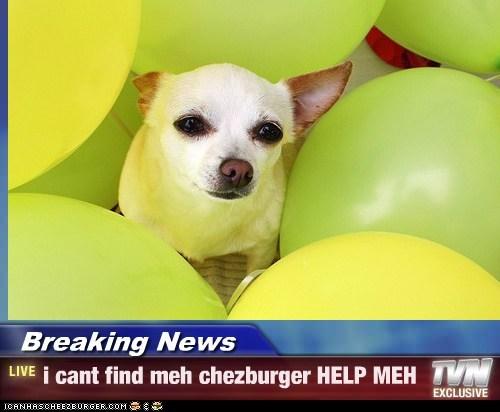 Cheezburger Image 6745995776