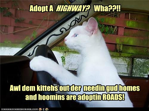 Adopt A Wha??!! Awl dem kittehs out der needin gud homes and hoomins are adoptin ROADS! HIGHWAY?