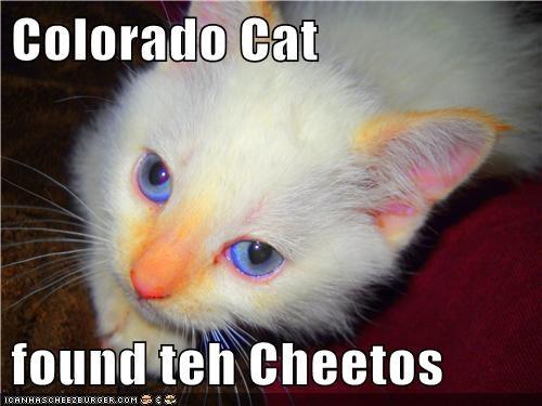 hungry munchies Colorado marijuana mj captions washington cheetos Cats weed - 6746076928