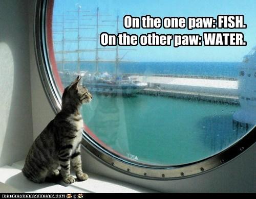 decisions water captions ocean fish Cats - 6746156544