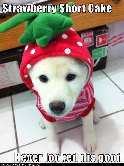 costume,dogs,strawberry shortcake,puppy,strawberry,what breed