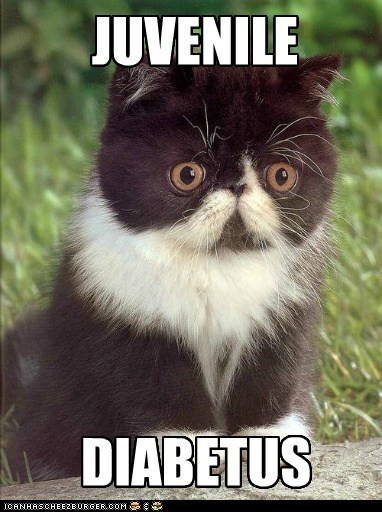 diabetes captions diabetus wilford brimley Cats reference