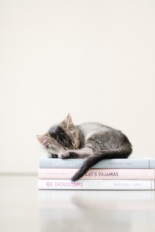 cyoot kitteh of teh day kitten reading books piles Cats sleeping - 6746404608