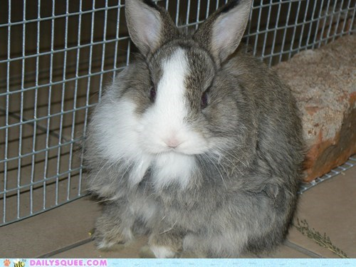 Bunday reader squee happy bunday pet rabbit bunny squee - 6747306496
