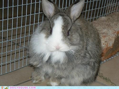 Bunday reader squee happy bunday pet rabbit bunny squee - 6747306496
