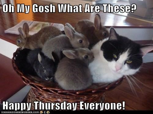Image result for happy thursday cat images