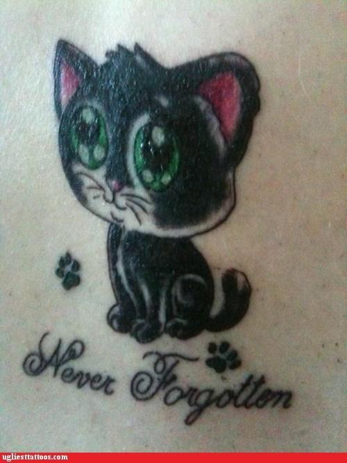 cat - 6747666688