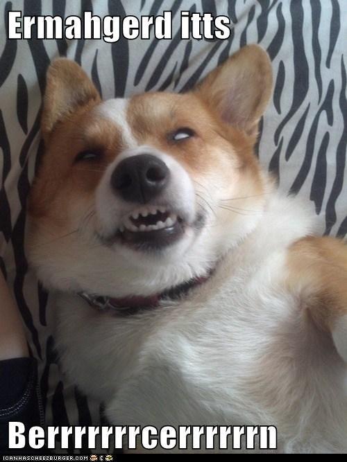 Ermahgerd goggie dogs - 6747725056