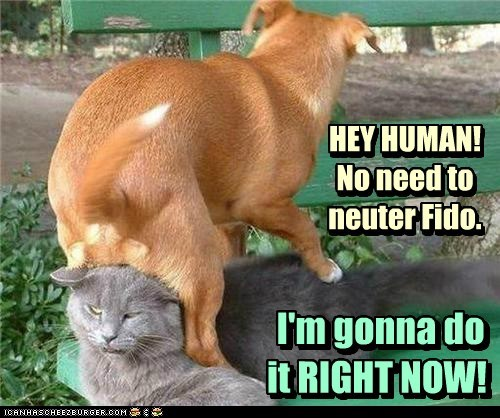 dogs neutering fighting angry Cats