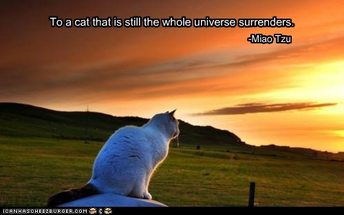 To a cat that is still the whole universe surrenders. -Miao Tzu