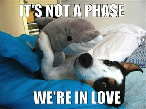 dolphin,not a phase,we're in love,dogs