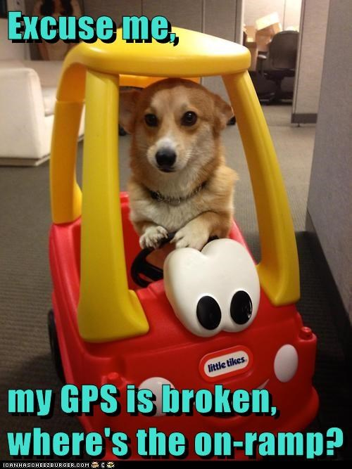 gps,dogs,car,driving,corgi,on ramp,lost