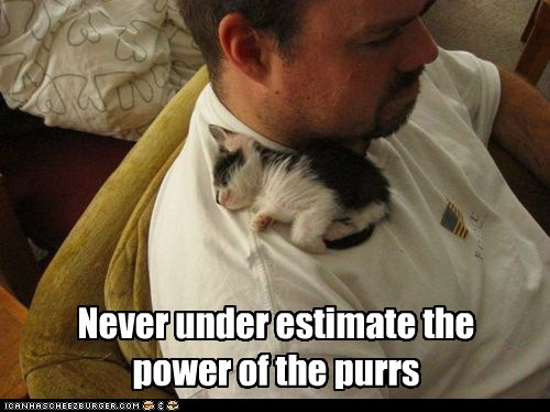 Never under estimate the power of the purrs