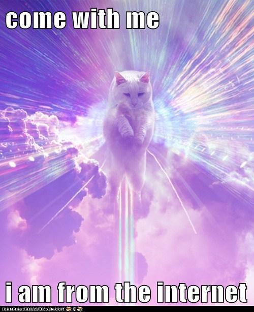 guide internet captions Cats - 6748572416