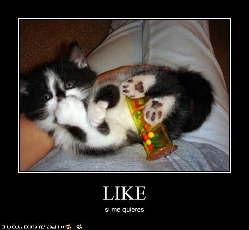 Cheezburger Image 6748671232