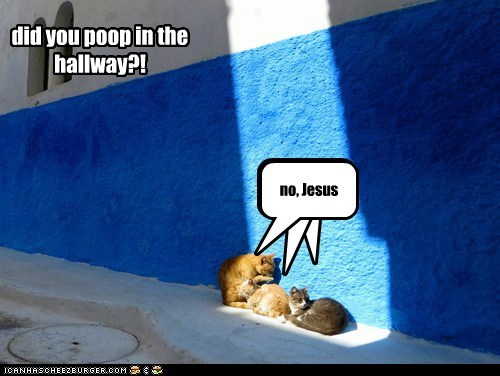 jesus holy god hallway poop captions Cats - 6748760064