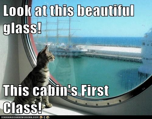 Cheezburger Image 6748769024