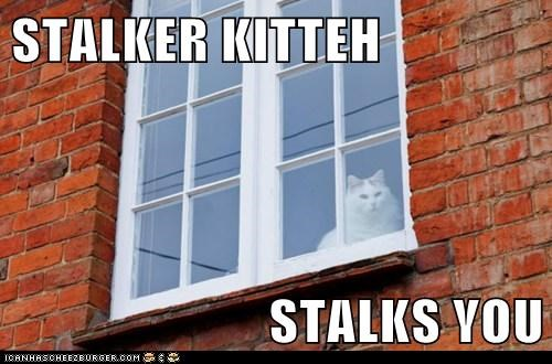 stalker creepy captions watch Cats window