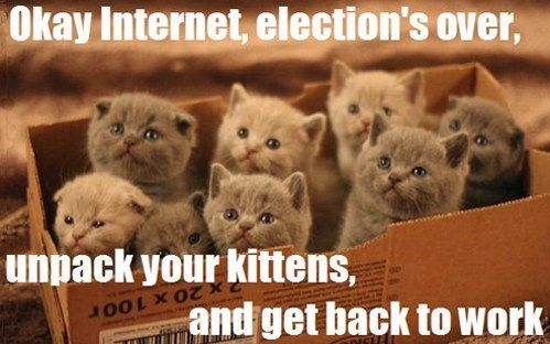 elections,unpack,internet,captions,the internet,Cats,politics