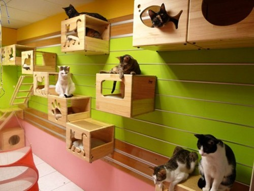 furniture climb boxes Cats wall home - 6748968704