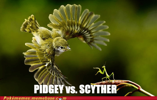 IRL,praying mantis,scyther,bird,pidgey