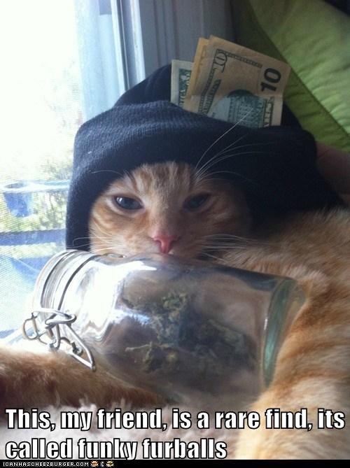 dealer marijuana mj captions Cats weed bud - 6749305344
