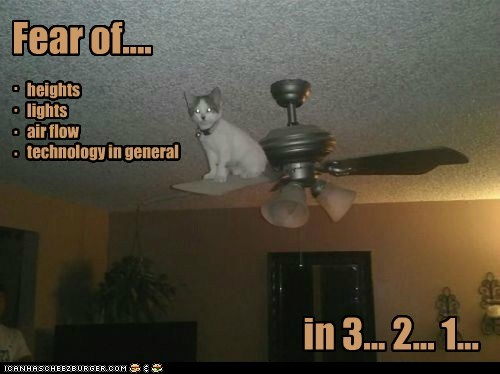 ceiling fear bad idea captions fan spin Cats - 6749346048
