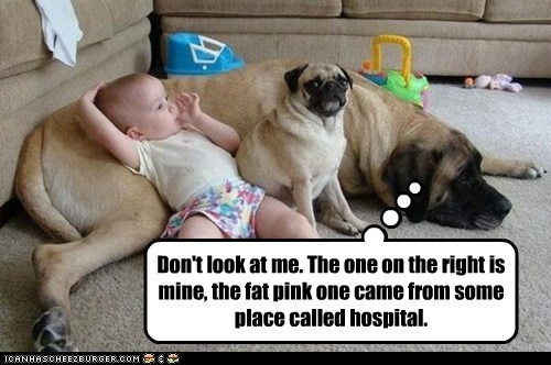 dogs baby pug hospital what is that mine mastiff
