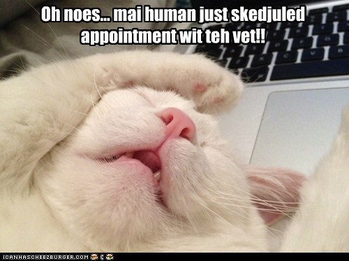 Oh noes... mai human just skedjuled appointment wit teh vet!!