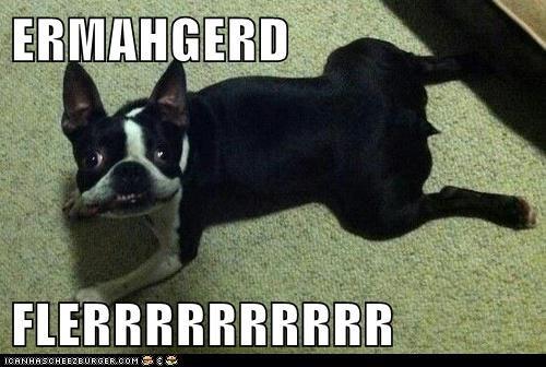 floor Ermahgerd goggie comfy dogs - 6750820352