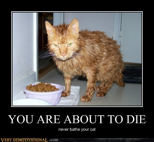 cat,Death,bath,awaits