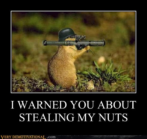 stealing squirrel nuts