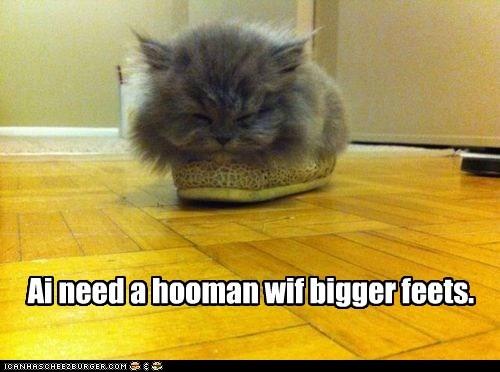 slipper feet big feet captions if it fits big Cats - 6751258880