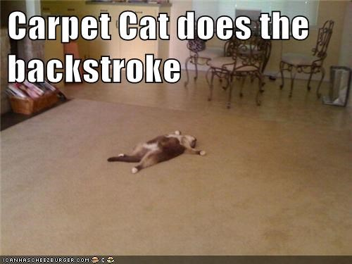 captions swimming backstroke Cats carpet - 6751284992